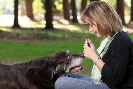 Senior dog eating treat