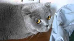 Seriously guilty cat | Sheknows.com