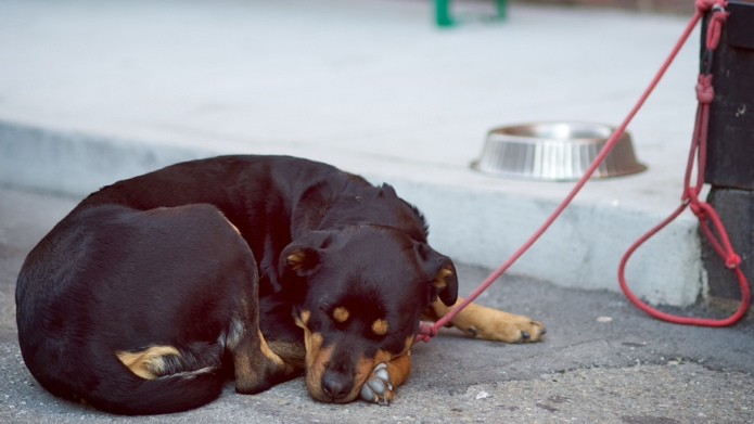 Keeping dogs chained up should be