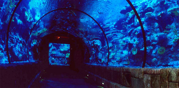 Shark reef in Las Vegas