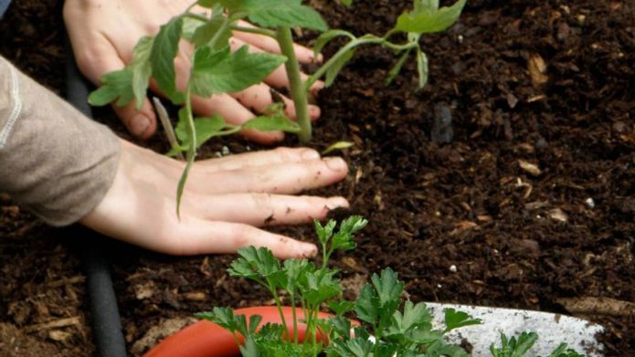 8 Super-easy gardening tips you'll use