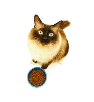 The truth about your cat's food