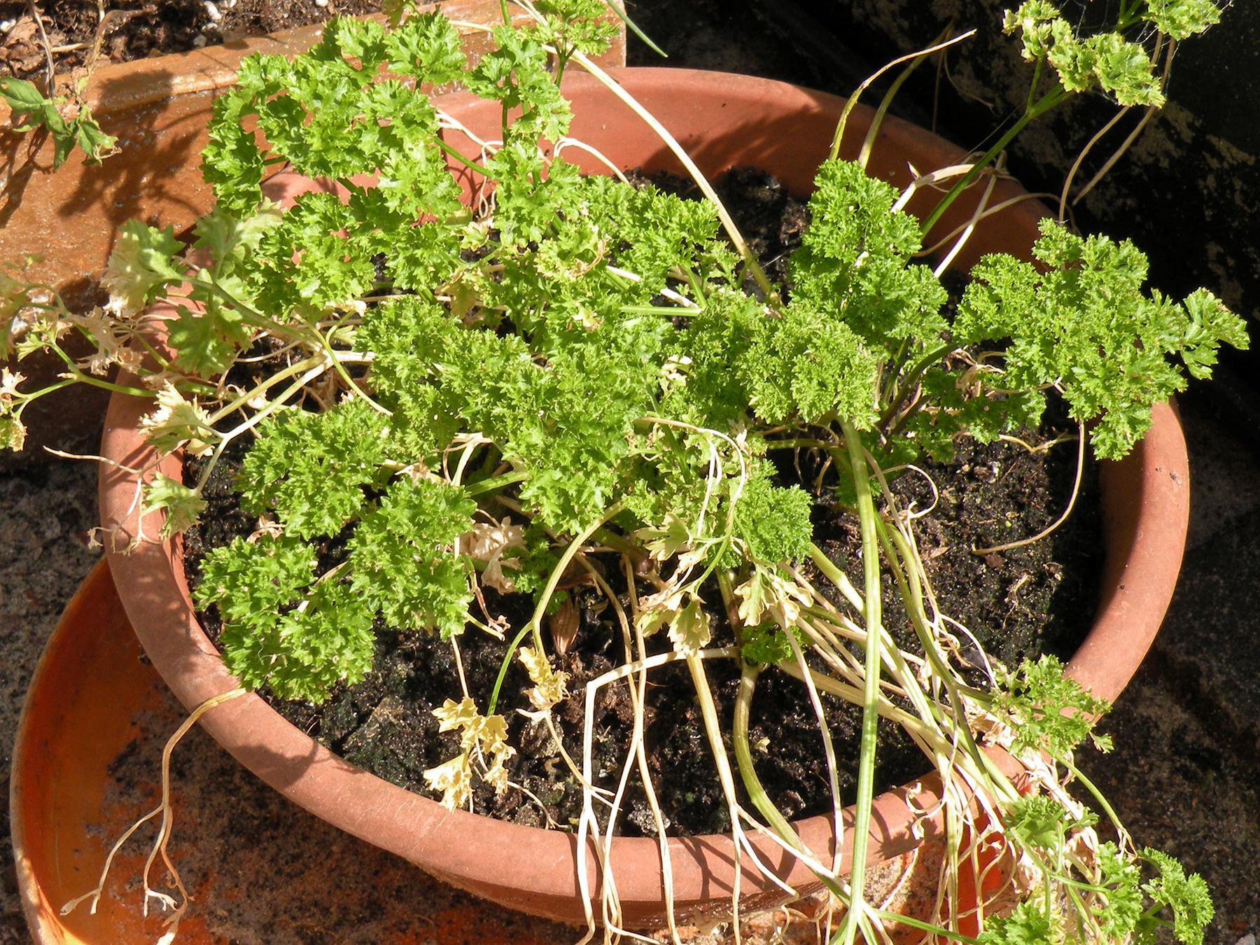 Remove dead plants