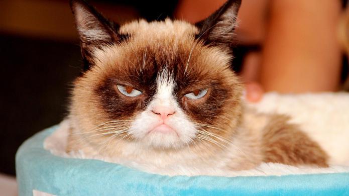 Grumpy Cat's Christmas movie is the