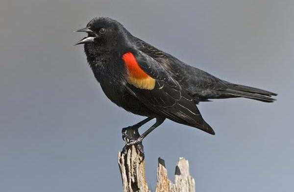 Arkansas falling birds: Died from trauma