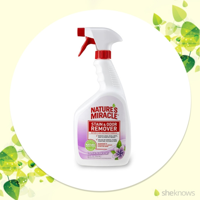 Carpet pet stain cleaner