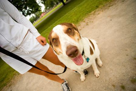 Walk to save pets