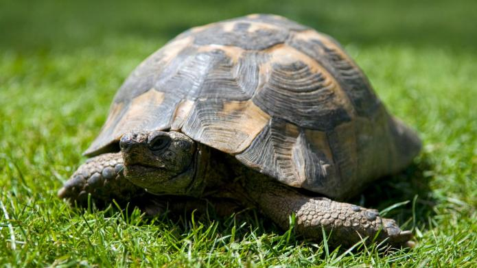 Reasons pet turtles and tortoises are