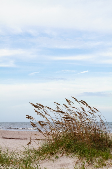 Beach grass on a sand dune in front of the ocean