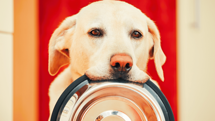 23 Homemade Dog Food Recipes Your