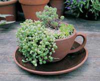 Garden Artisans ~ Tea Cup and Saucer Planter