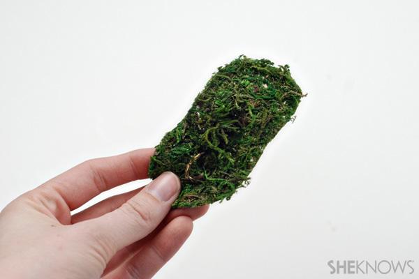 Terrarium moss