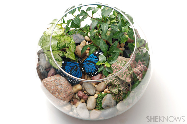 Indoor terrarium
