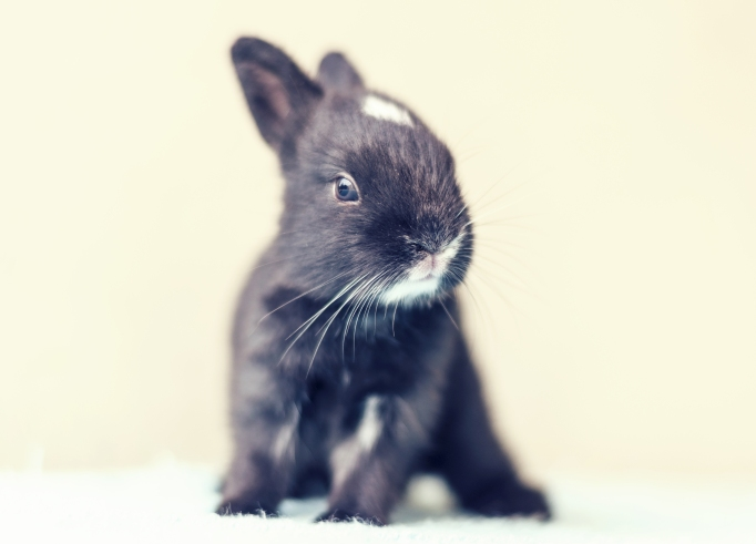 Day 16 baby bunny