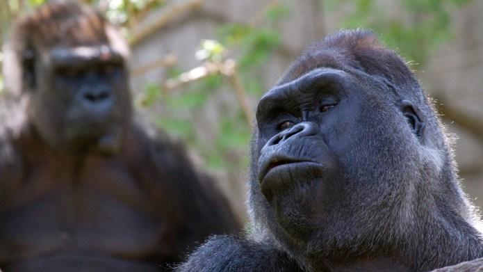 Harambe the gorilla didn't deserve to