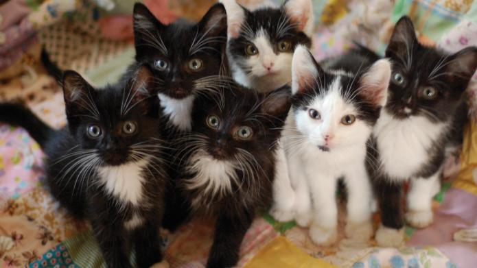 100 Black-and-white kittens abandoned at a