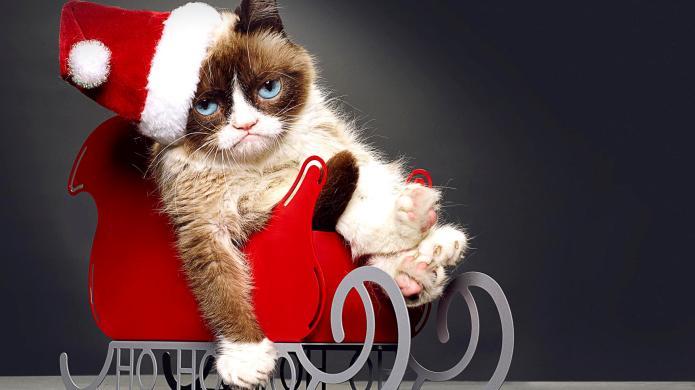 Grumpy Cat's Worst Christmas Ever: 6