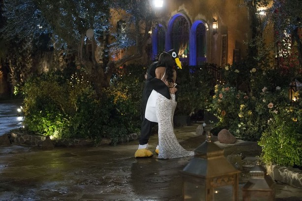 The Bachelorette penguin