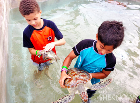 Kids playing with turtles