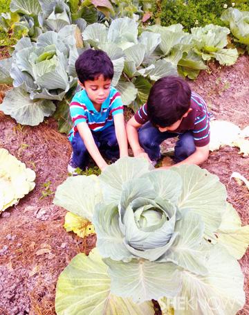 Tiany's sons gardening