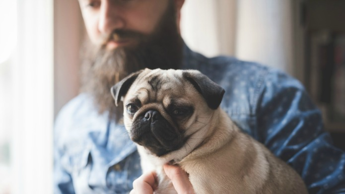6 dog breeds to match your