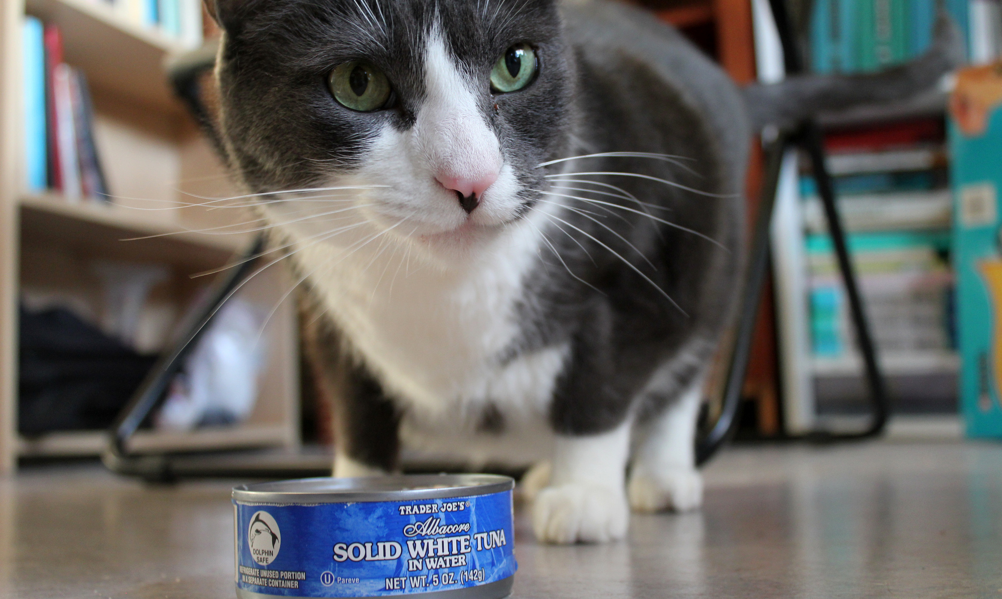 Can Cats Eat Canned Tuna Benefits Potential Health Concerns