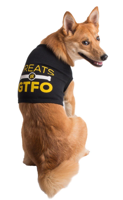"dog shirt reads ""treats or GTFO"""