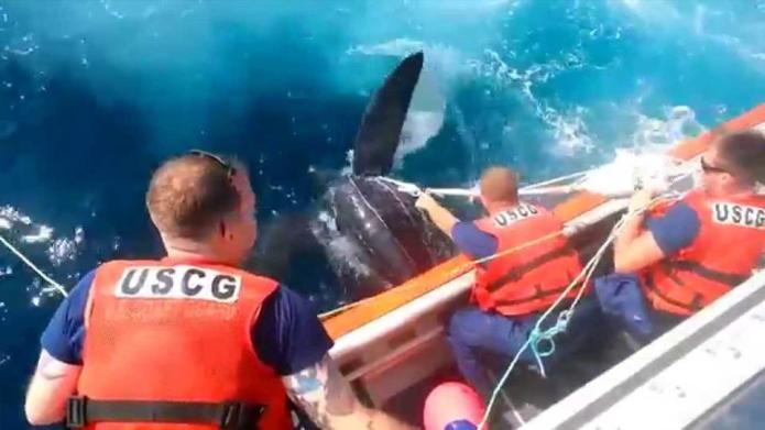 Coast Guard saves 800-pound sea turtle