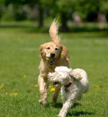 Unspoken Dog Park Rules