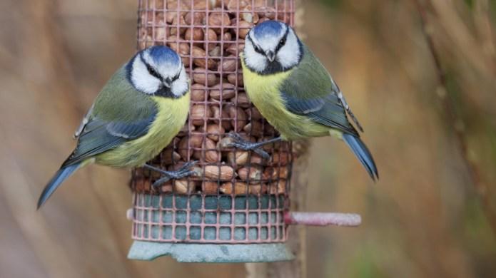 Top tips for bird feeding