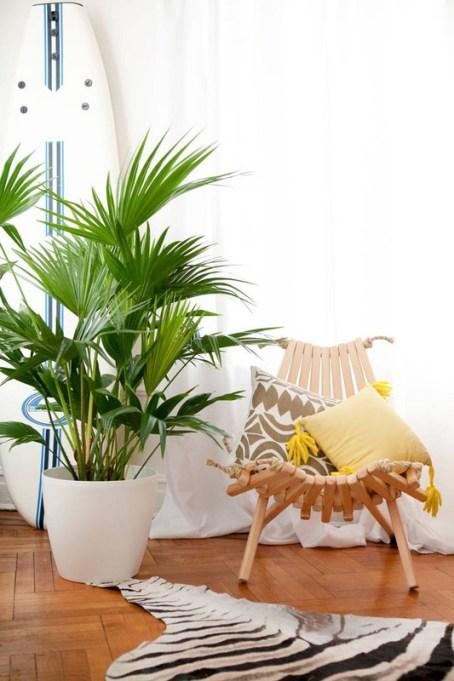 Big, Leafy House Plants: Palm Plants