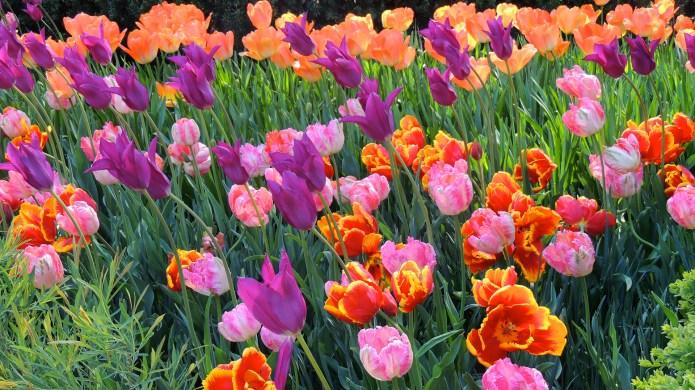 Spring Flowers at Longwood Gardens Kennett