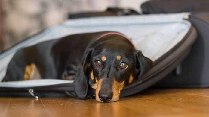 How to pack for your dogs