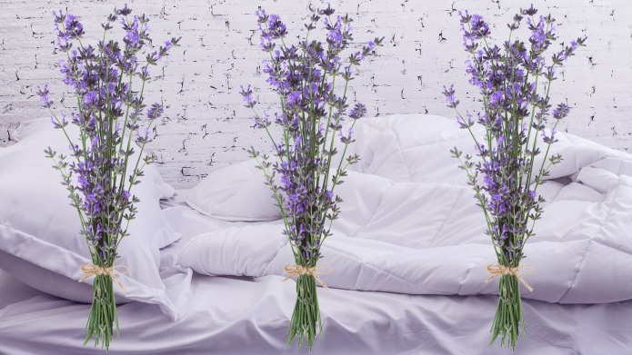 Does Lavender Really Help You Sleep