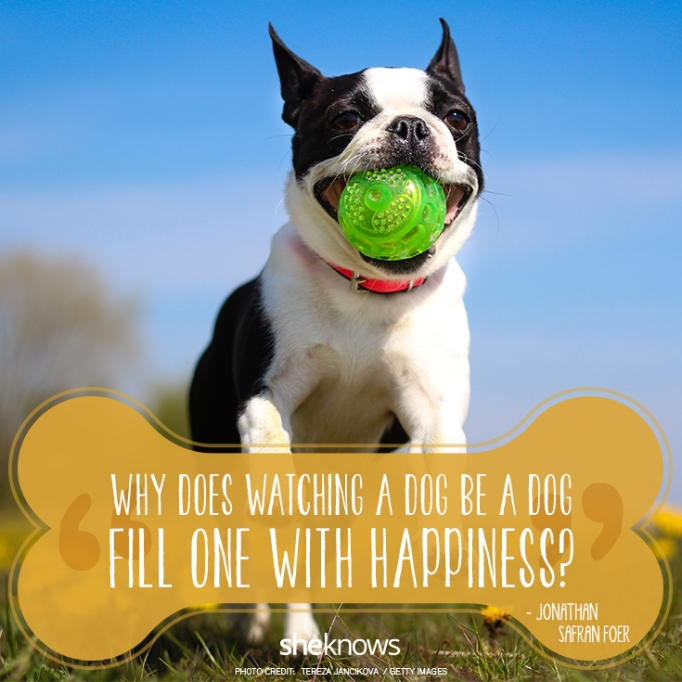"""""""Why does watching a dog be a dog fill one with happiness?""""? —Jonathan Safran Foer"""