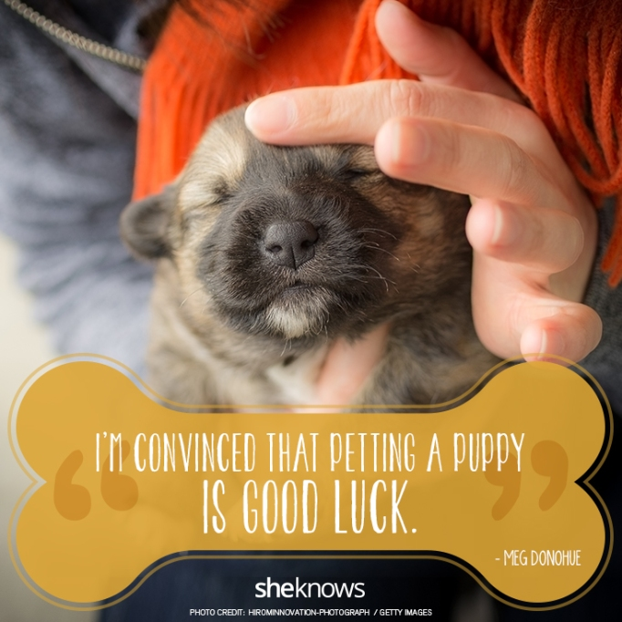 """""""I'm convinced that petting a puppy is good luck."""" —Meg Donohue"""