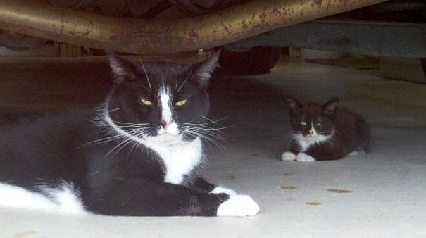 cats under a car