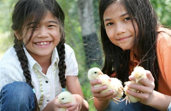 How to raise pet chickens