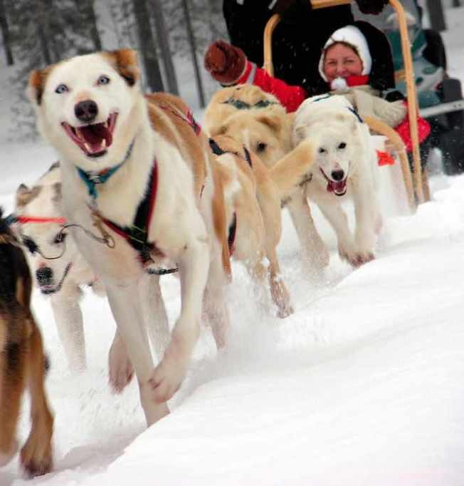Beautiful Adventure Destinations: Go Dog Sledding In Finland