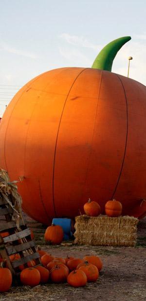 North Carolina: Pumpkin patch heaven