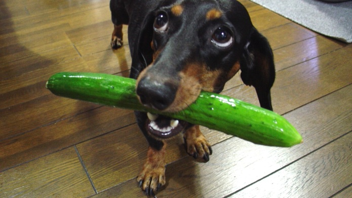 7 Weird things obsessed dog owners