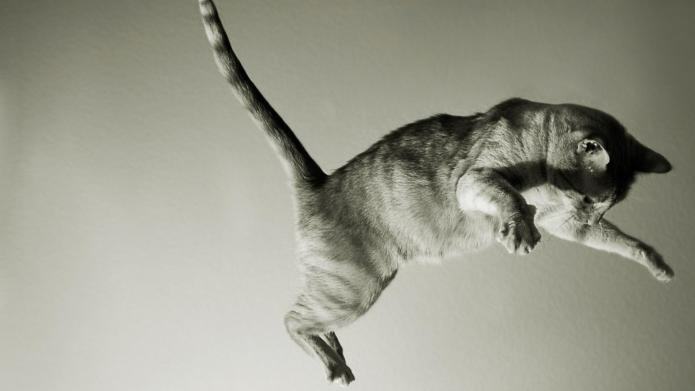 9 Ways cats are born to