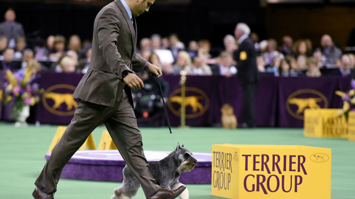 The Westminster Dog Show Will Feature