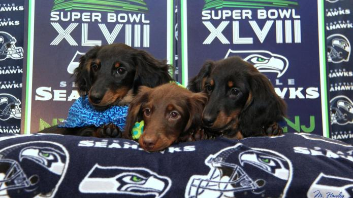 These pets can't believe the Seahawks