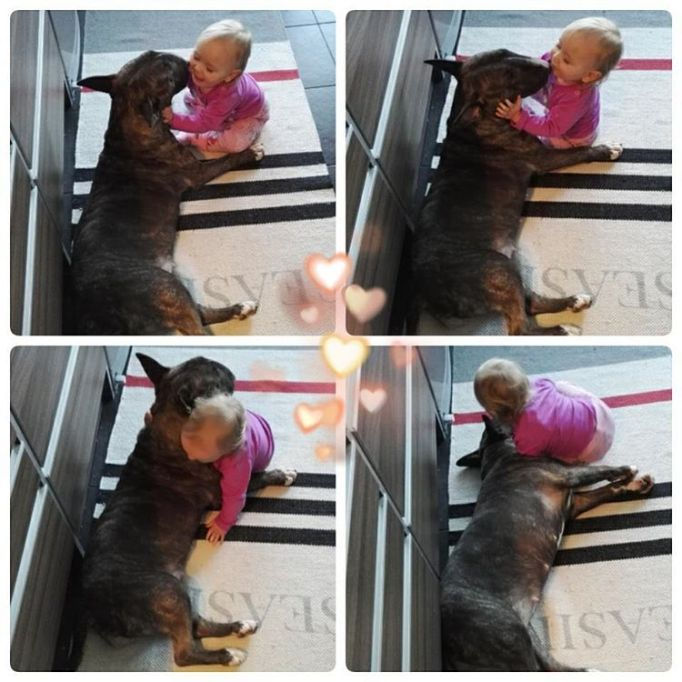 Dog playing with baby
