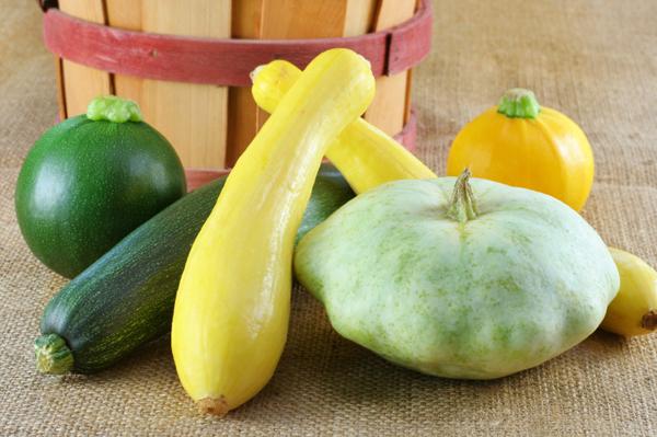 variety of squash