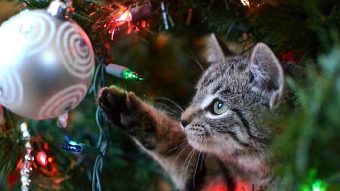 12 Ways to pet-proof your Christmas