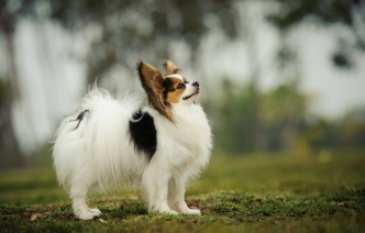 The 10 Smartest Dogs Breeds Are