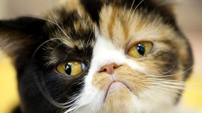 QUIZ: Why does your cat hate