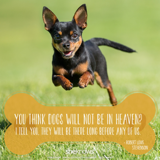 You think dogs will not be in heaven? I tell you, they will be there long before any of us. —Robert Louis Stevenson
